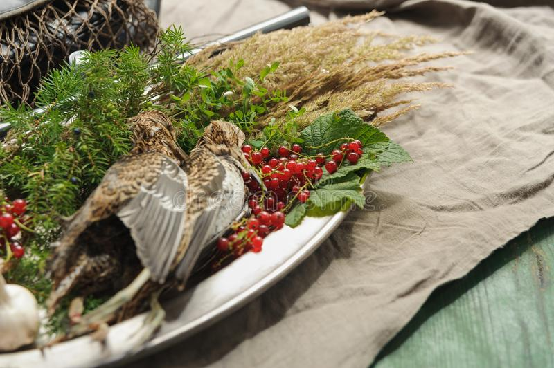 Wild hunting fowls in cooking. Two snipe or woodcock lie on metal dish. Wildfowl hunting. Wild hunting fowls in cooking. Two snipe or woodcock lie on metal dish stock image