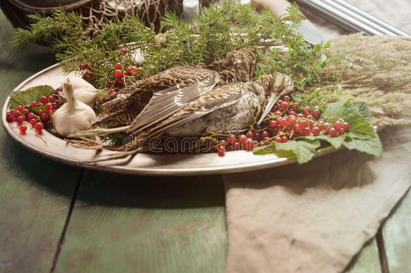 Wild hunting fowls in cooking. Two snipe or woodcock lie on metal dish. Wildfowl hunting. Wild hunting fowls in cooking. Two snipe or woodcock lie on metal dish royalty free stock photography