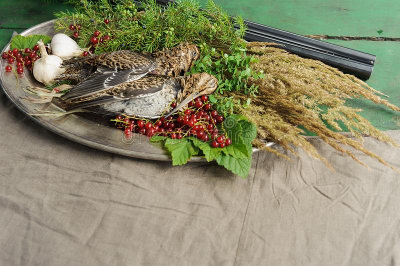Wild hunting fowls in cooking. Two snipe or woodcock lie on metal dish. Wildfowl hunting. Wild hunting fowls in cooking. Two snipe or woodcock lie on metal dish royalty free stock photos