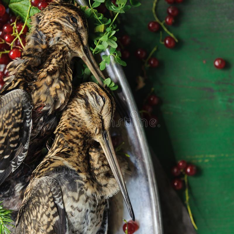 Wild hunting fowls in cooking. Two snipe or woodcock lie on metal dish. Wildfowl hunting. Wild hunting fowls in cooking. Two snipe or woodcock lie on metal dish royalty free stock photo