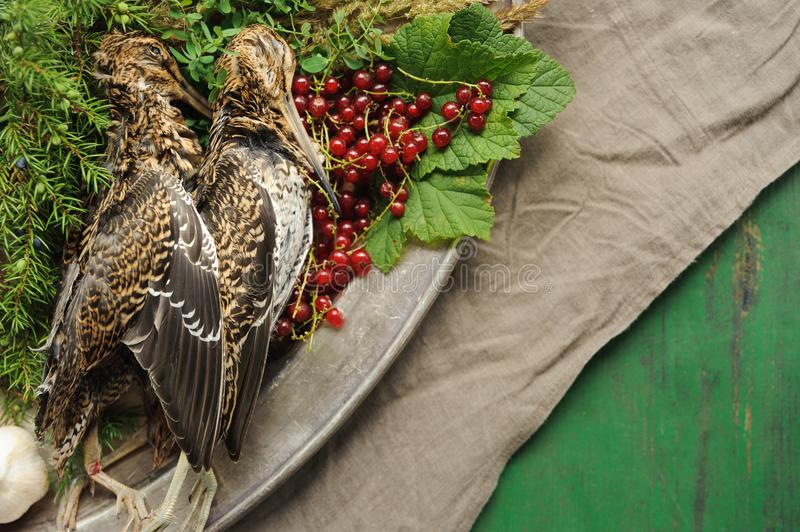 Wild hunting fowls in cooking. Two snipe or woodcock lie on metal dish. Wildfowl hunting. Wild hunting fowls in cooking. Two snipe or woodcock lie on metal dish stock photo