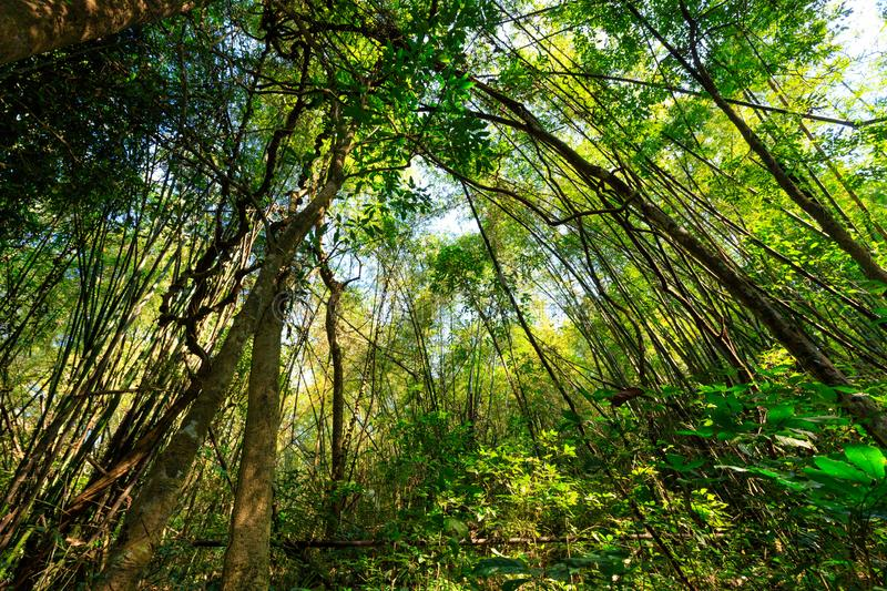 Wild jungle forest stock photo