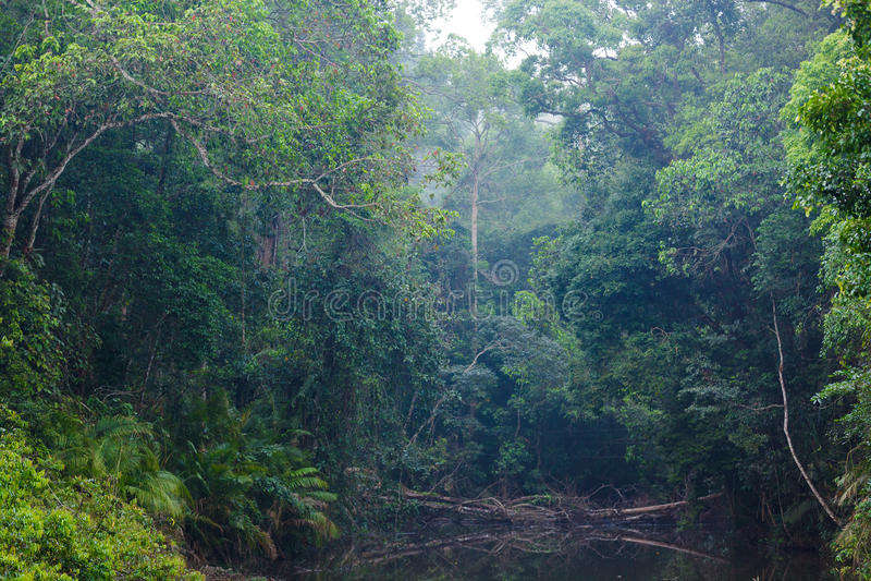 Wild jungle landscape royalty free stock photo