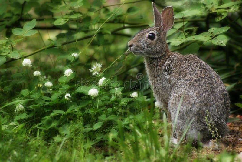 Download Wild kanin fotografering för bildbyråer. Bild av fjäder - 290445