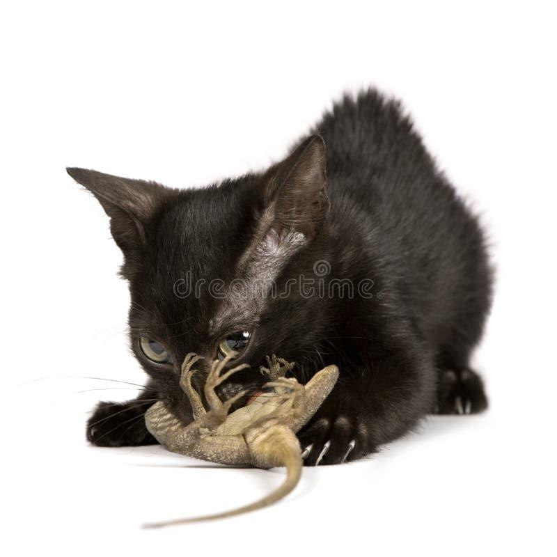 Wild Katje stock afbeelding