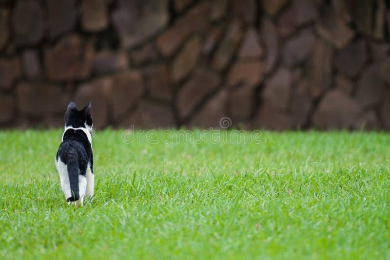 Wild katje op gazon van sisulu Botanische Tuinen van Durbans Walter royalty-vrije stock foto's