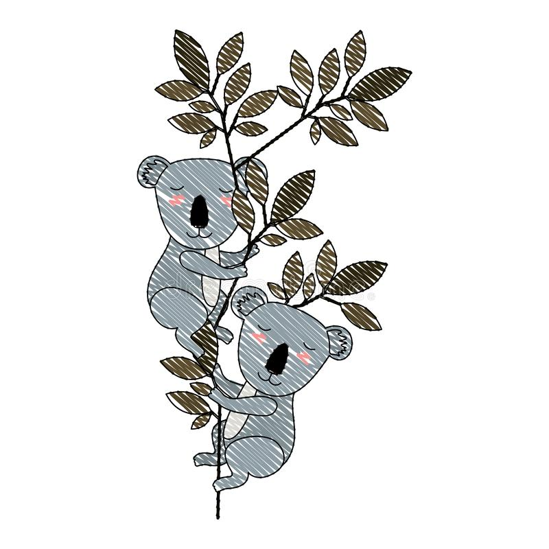 Wild koala'spaar in de wildernis stock illustratie