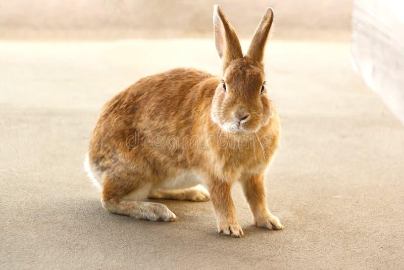 Wild konijn stock foto's