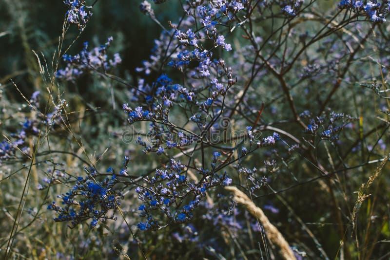 Wild kruid op het gebied Kleine purpere bloemen Natuurlijke achtergrond royalty-vrije stock fotografie