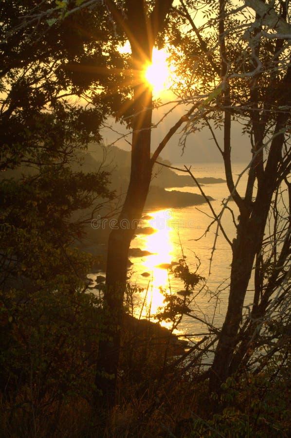 Wild kustzonlicht stock foto's