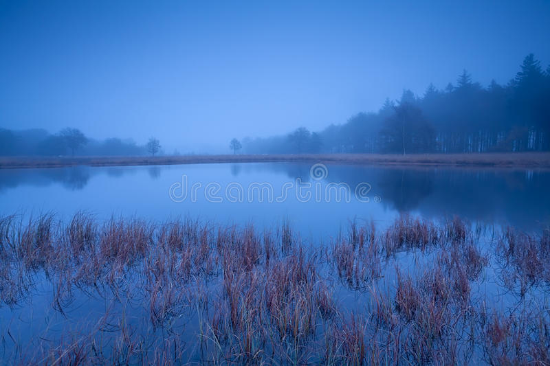 Download Wild lake in misty dusk stock image. Image of nobody - 35379847
