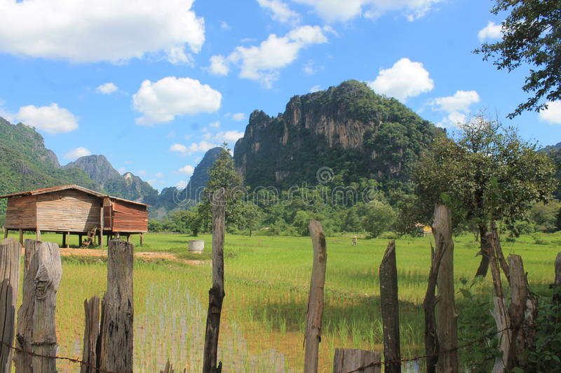 In the wild in laos stock images