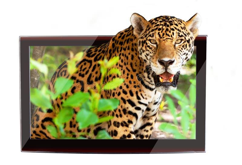 wild lebende Tiere 3D Fernsehapparat lizenzfreie abbildung