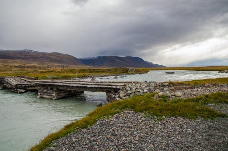 Wild lebende Tiere Altai Die meisten Klotz über blauem Fluss und dem mountai stockbild