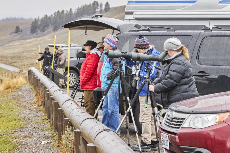 Wild lebende Tiere, die Beobachter beobachten, schlingen an einem kalten regnerischen Tag hinunter stockfotos