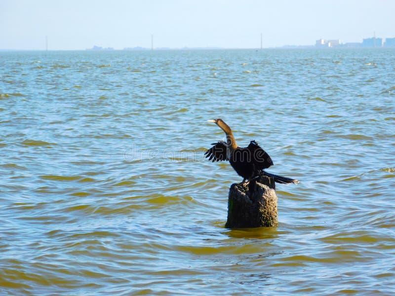 Wild lebende Tiere Melbournes, Florida stockbild