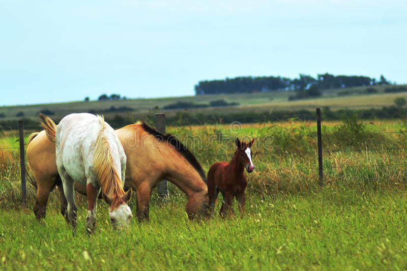 Wild lebende Tiere von Pferden stockbild