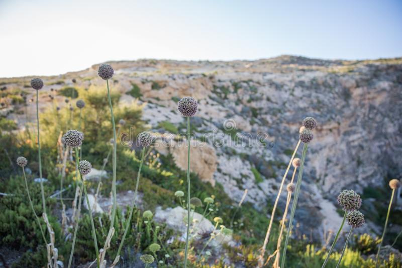 Limestone Quarry Industry At Gozo Island Editorial Image ...   Gozo Limestone