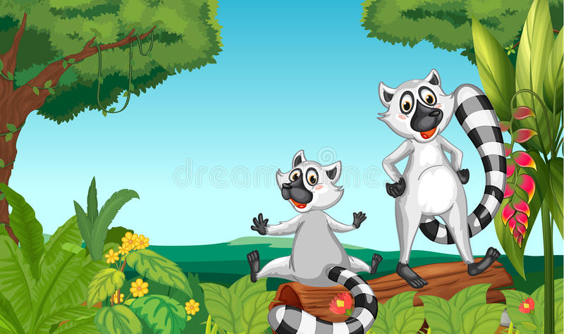 Wild Lemurs In The Woods Royalty Free Stock Images