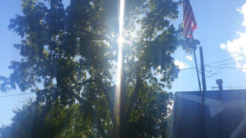 Wild licht door boom stock foto's