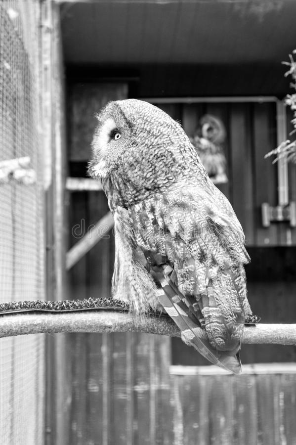 Wild life. Gorgeous big bird sit in cage. Calm and peaceful. Ornithology concept. Owl outdoor shot. Owl typical species. For many countries. Owl in zoo cage stock image