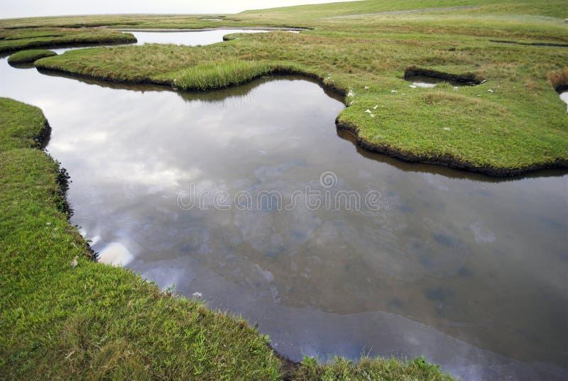 wild liggandevatten arkivbilder