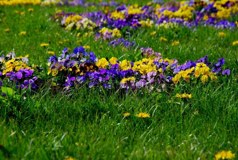 wild ljusa blommor royaltyfri foto