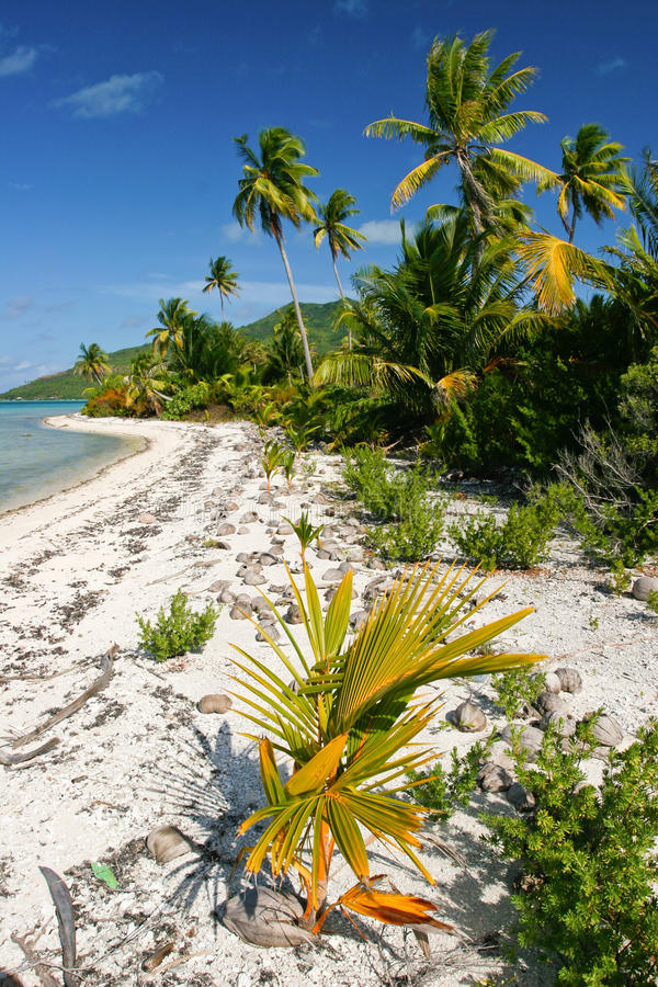 Free Wild Lonely Tropical Beach On Maupiti, French Poly Royalty Free Stock Image - 23763236
