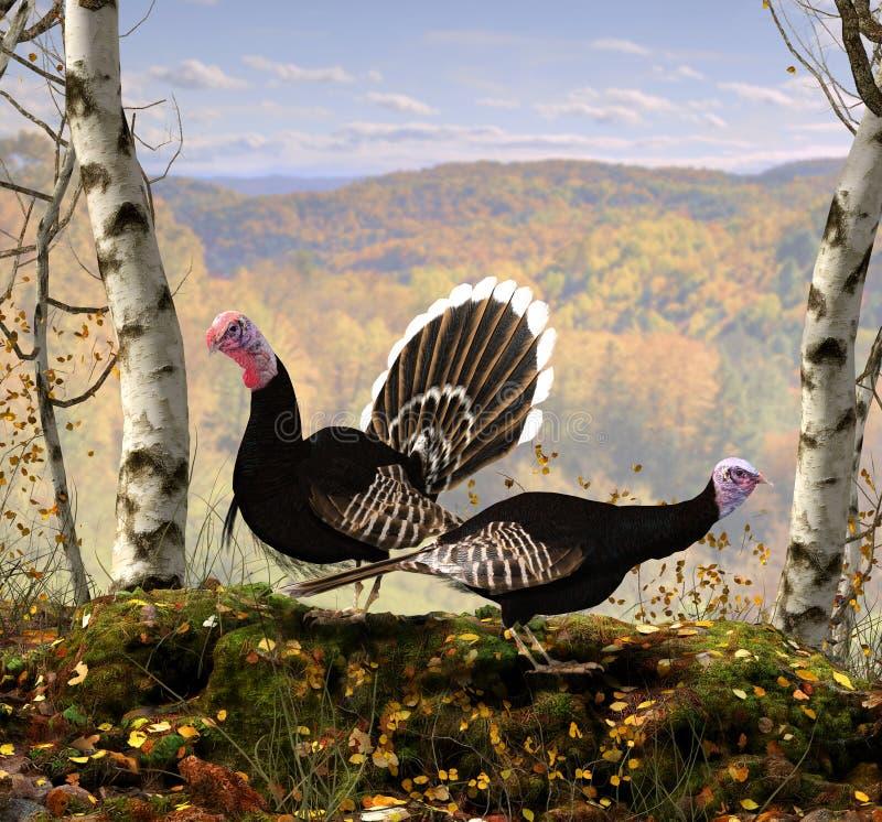 Wild mannelijk en vrouwelijk Turkije in volledig het fokkengevederte in de herfst, tijdens de Indische 3d Zomer, geeft illustrati royalty-vrije stock foto