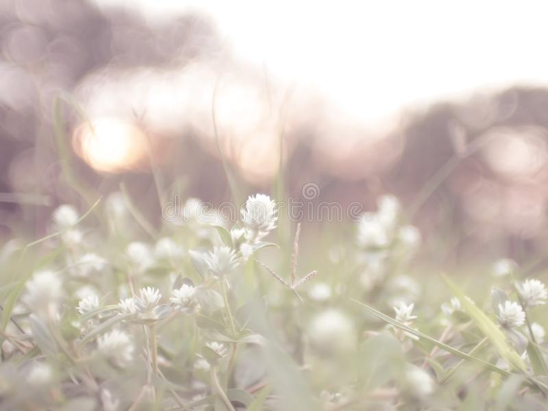 Wild meadow flower grass beautiful flowers in spring field. Nature outdoor vintage sunny photo with sun and soft warm tone colors in evening sunlight stock image