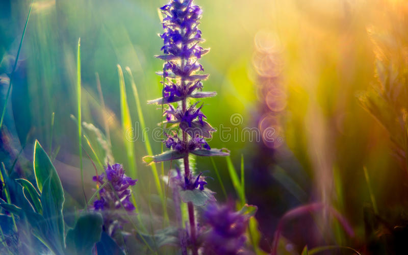 Wild meadow flowers and sun stock photo