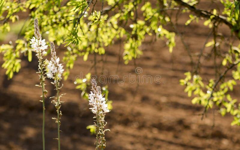Wild Mediterranean flowers royalty free stock image