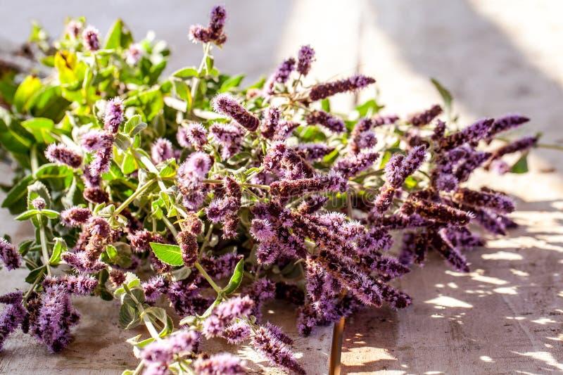 Wild mint on desk. Wild mint flower with purple flower stock images