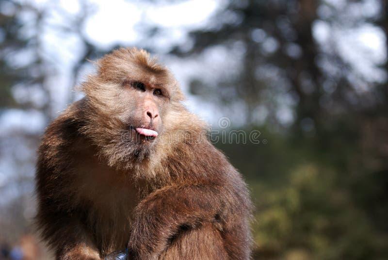 Download Wild monkey stock photo. Image of eating, animals, happy - 22410998