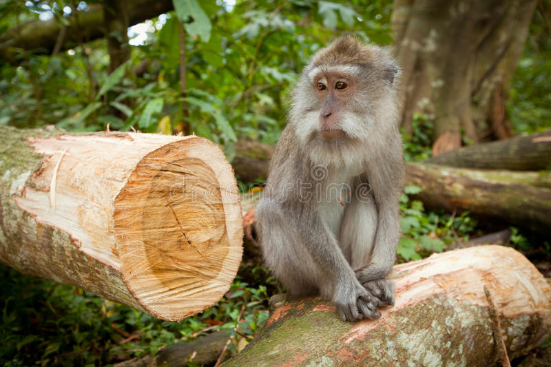 Download A wild Monkey stock photo. Image of facing, captive, baby - 24067422