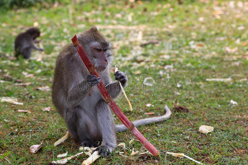 Wild monkey stock photos