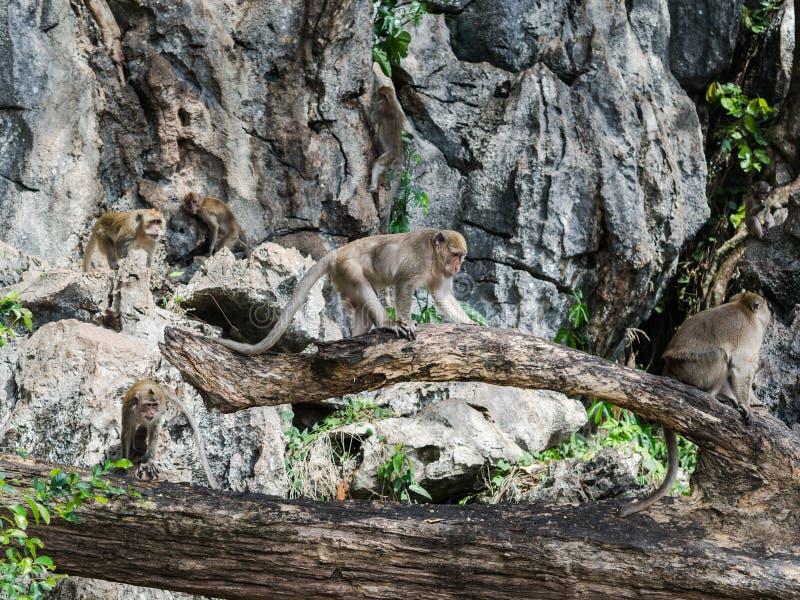 Wild monkeys on a tree branch stock photos