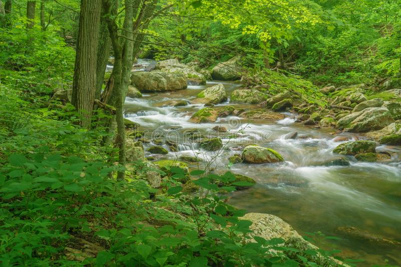 Wild Mountain Trout Stream - 3. Wild Mountain Trout Stream located in the Jefferson National Forest, Giles County, Virginia, USA royalty free stock images