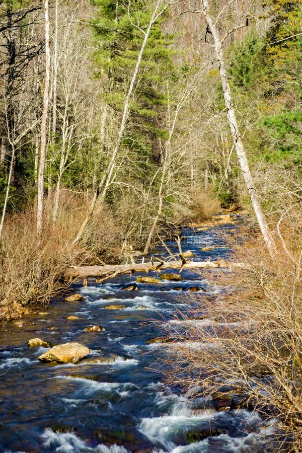Wild Mountain Trout Stream. Located in Jefferson National Forest, Giles County, Virginia, USA royalty free stock photography