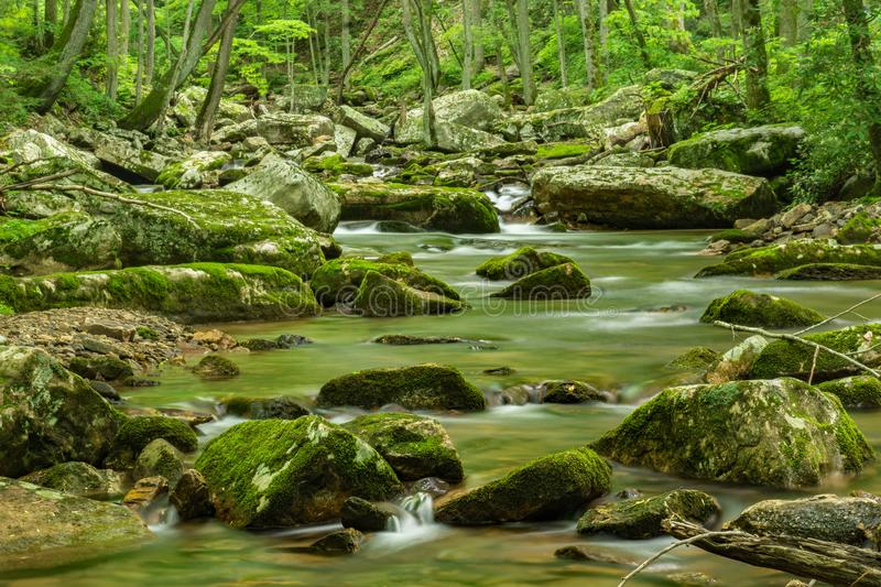 Wild Mountain Trout Stream. Located in the Jefferson National Forest, Giles County, Virginia, USA royalty free stock image