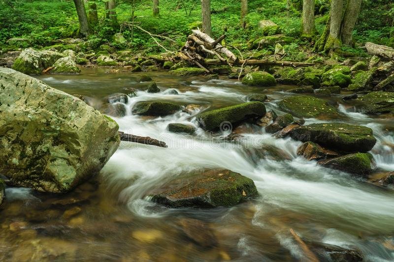 Wild Mountain Trout Stream - 2. Wild Mountain Trout Stream located in the Jefferson National Forest, Giles County, Virginia, USA royalty free stock photo