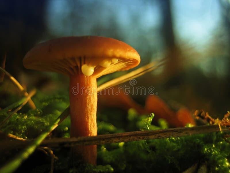 Wild mushroom stock photos