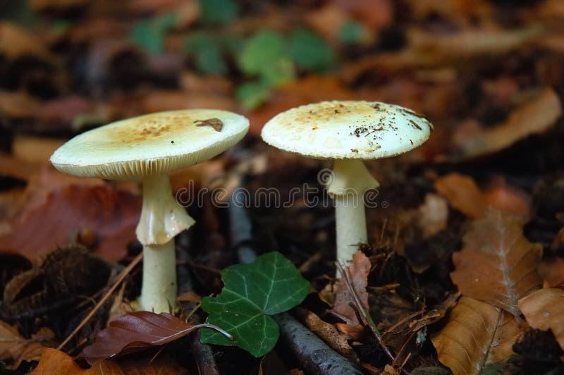 Download Wild mushrooms stock image. Image of diet, good, field - 1418103