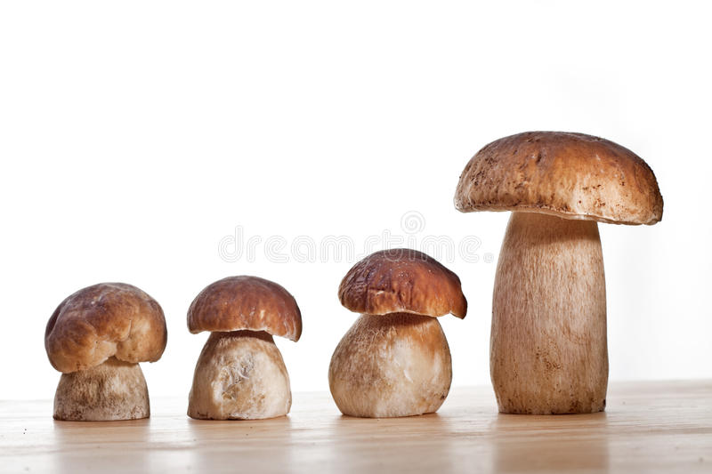 Wild Mushrooms. Studio shoot of wild mushrooms on the kitchen desk with white background stock images