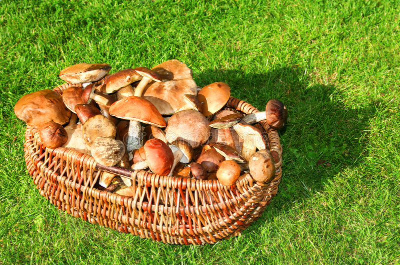 Wild mushrooms. On the moss stock image