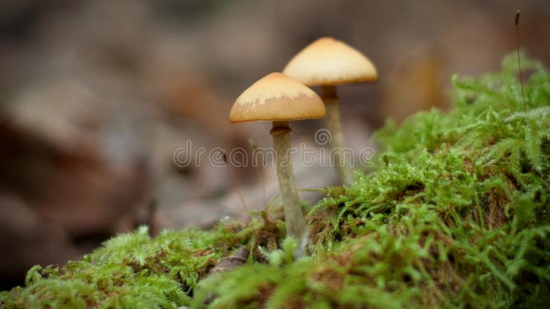 Wild mushrooms in a French forest.  stock photo