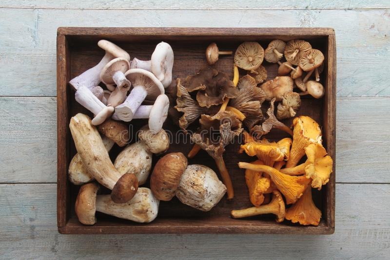 Wild mushrooms. Fresh picked wild mushrooms fungi royalty free stock photo
