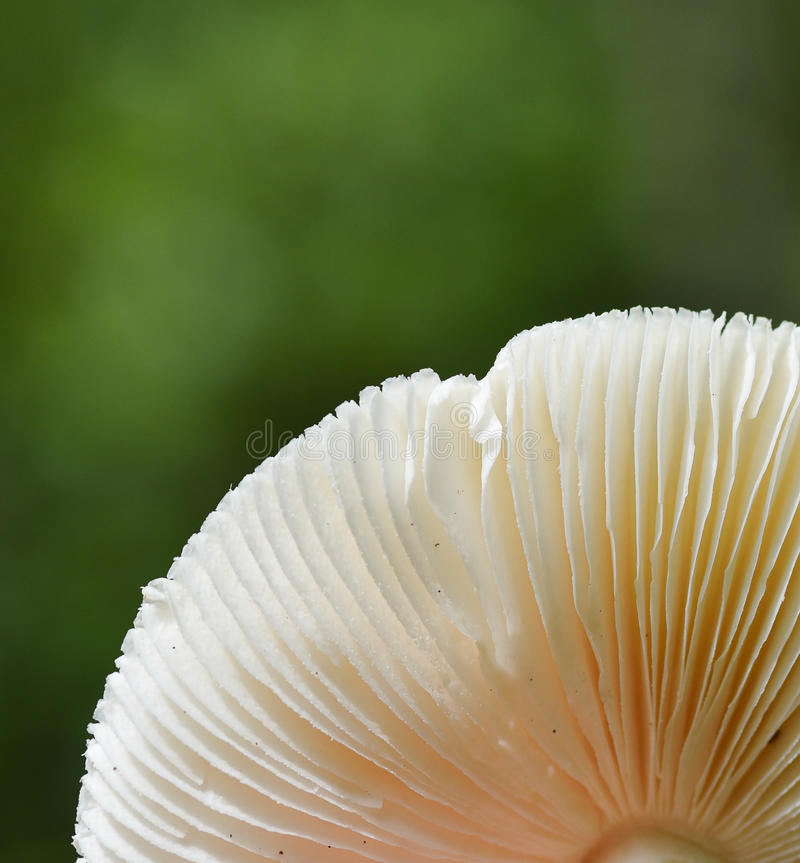 Wild mushrooms in nature forest background royalty free stock photos