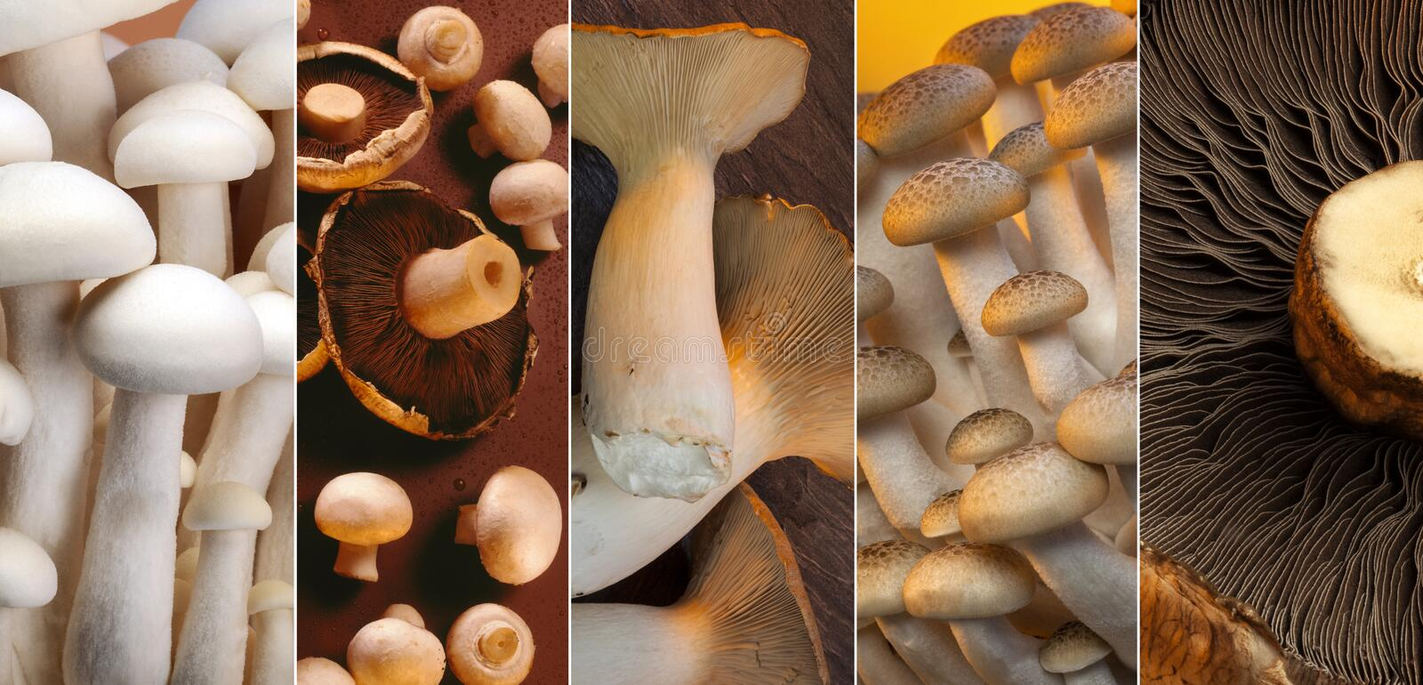 Wild Mushrooms. A selection of Wild Mushrooms - Enoki, Shiro Shimeji, Buna Shimeji, button mushrooms, King Oyster and Portabello stock images