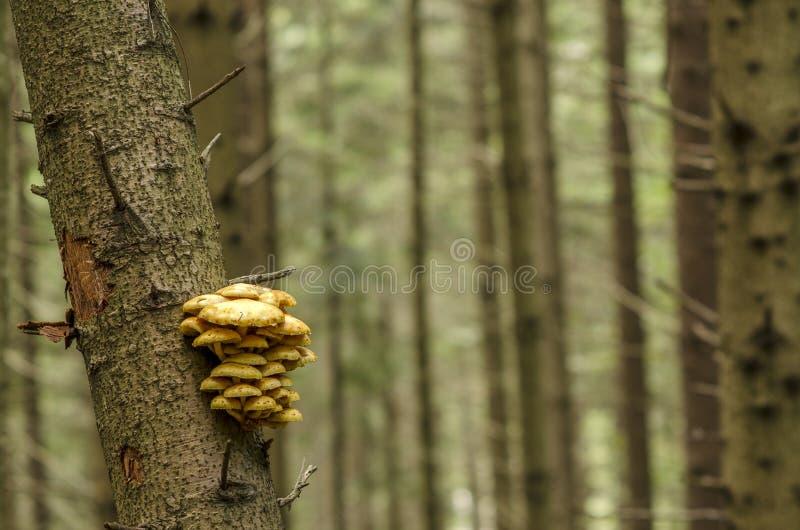 Wild mushrooms on a tree branch stock image